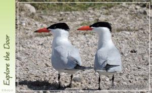 birding-hike-5-12-2018