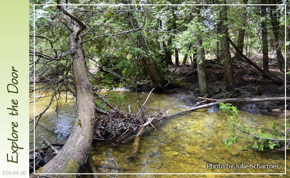 Heins-Creek-Preserve-4-20-2019