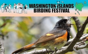 Washington-Island-Bird-Festival-featured-image