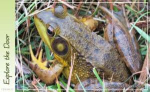 frog-chorus-4-27-2019